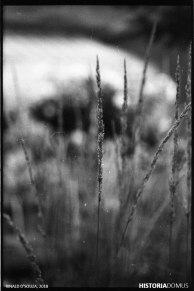 Contemplating Film: Making my first prints